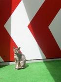"""Gary Venter cat"""" title=""""Gary Venter cat"""